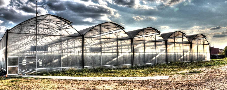 solar sera sere solarii transilvania folie sticla multiart multimed tunel vertical easyart nordiart simplu glassart hobby botanic garden cercetare storeart farmart ciupercarie ciupercarii activitati recreative fotovoltaic venlosun multisun umbrire lalele capsuni generator generatoare floricultura pepiniera policarbonat gradina botanica gradini botanice flori finantare fonduri europene ghivece arce culme hidroponic struguri professional tanar fermier cultivare legume gaz metan livezi rosii fertirigare ecran umbrire castraveti rasaduri familie pereti verticali submasura 4.1 cresterea animalelor depozitare stocare Italian calla rosa magnolia mughetto girasole seretransilvania